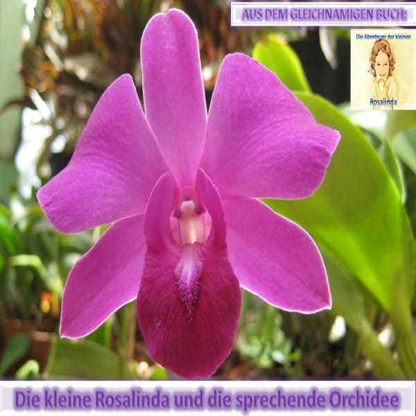 Rosalinda und die sprechende Orchidee - Aus dem gleichnamigen Buch: Die Abenteuer der kleinen Rosalinda