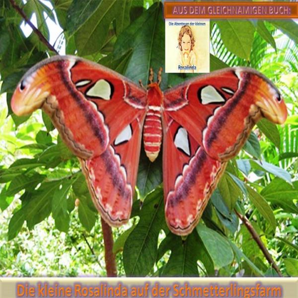 Die kleine Rosalinda auf der Schmetterlingsfarm - Aus dem gleichnamigen Buch: Die Abenteuer der kleinen Rosalinda