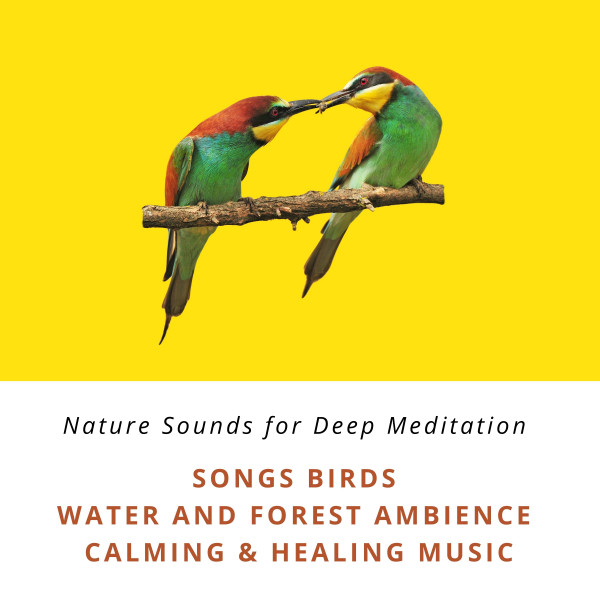 Nature Sounds for Deep Meditation: Song Birds, Water & Forest Ambience, Bird Calls, Calming & Healing Music - Premium-XXL-Bundle (Nature Sounds with and without music)